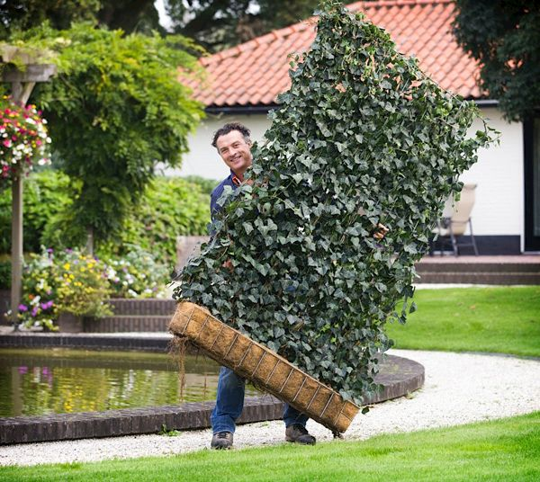 Sichtschutz und Lärmschutz Natürlicher Lärm  und Sichtschutz durch Heckenelemente   Gardenplaza